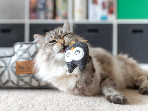 Frisky Catnip Furball