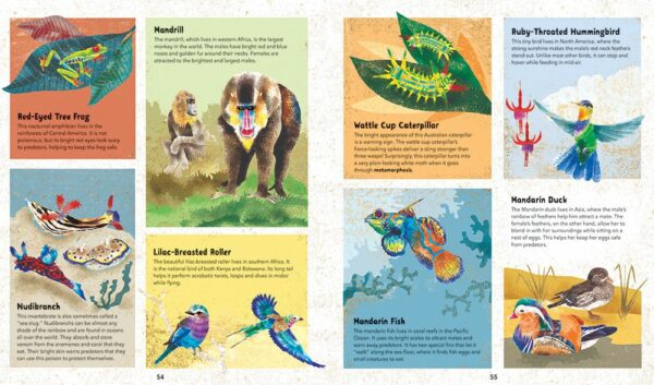Incredible Animals Guide for Kids