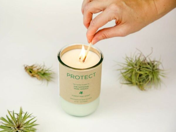 PROTECT Soy Candle - Forest Pine Scent