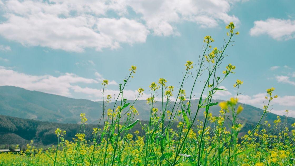 Beautiful flowers showing a nourishing environment